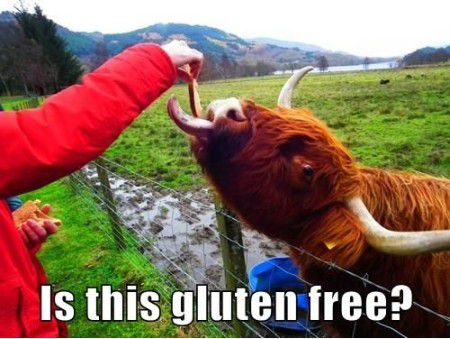 Funniest_Memes_is-this-gluten-free_1265