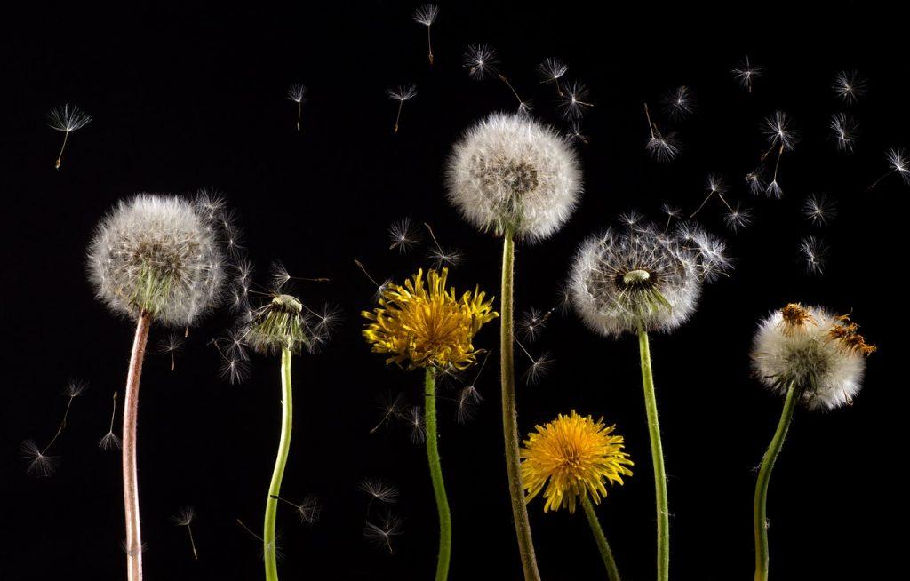 alergijski rinitis lečenje