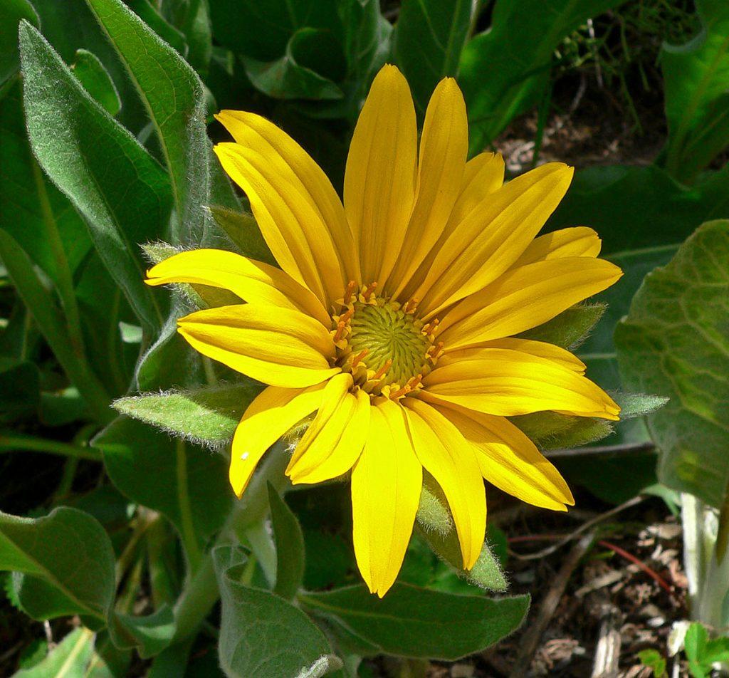homeopatija i alergija