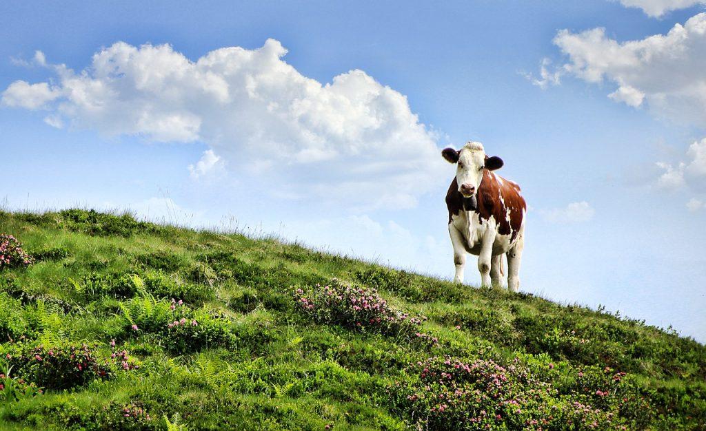 alergija na kravlje mleko