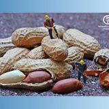 tretman za alergiju na kikiriki